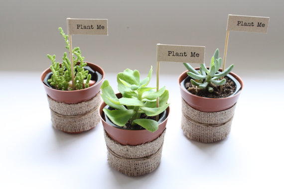 Plants for wedding favours or place names - etsy.com